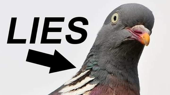 Nuova teoria del complotto: gli uccelli non esistono!